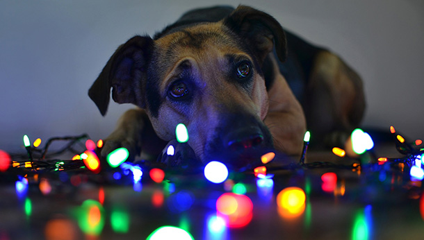 dog with lights